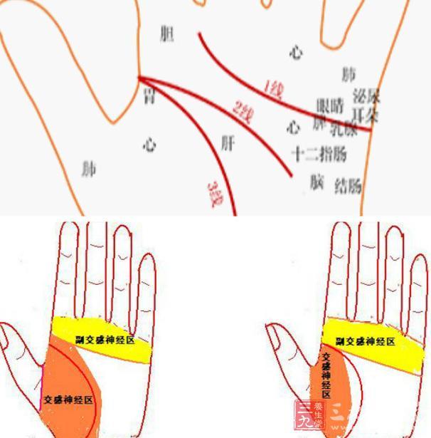 从掌纹看健康_这可不是算命,我们说的是掌纹医学,分析掌纹的变化来判断体内的健康状