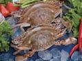 三种螃蟹吃不得