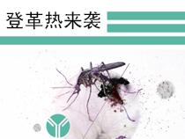 登革热病毒及预防