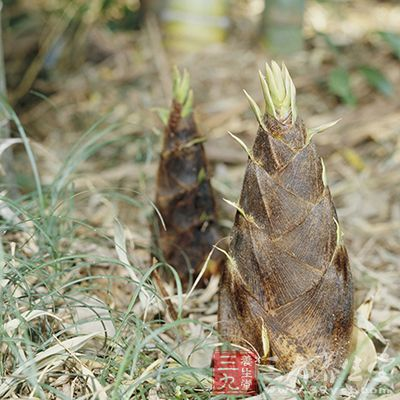 春笋要质地鲜嫩,黄色或白色最好