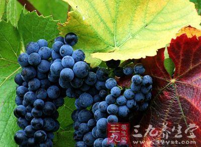止咳的水果 哪些水果能止咳化痰