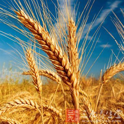 小麦细胞手绘图