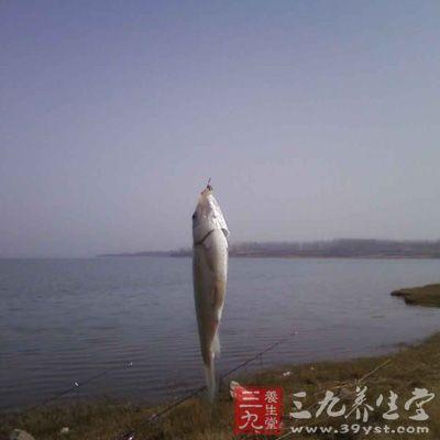 冬季钓鱼技巧 东北冬季水库海竿钓鲫鱼技巧