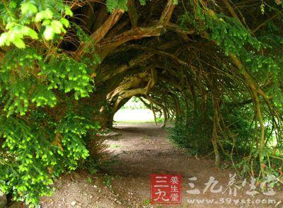 全球最美树隧道 让你体验忘记呼吸的美