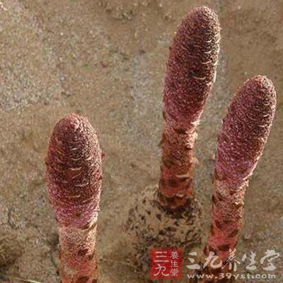 锁阳的繁衍过程不同于一般植物
