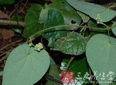 药材基源:为双子叶植物药萝藦科植物须药藤的茎藤图片