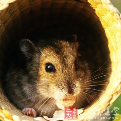 野生动物当宠物容易感染传染病