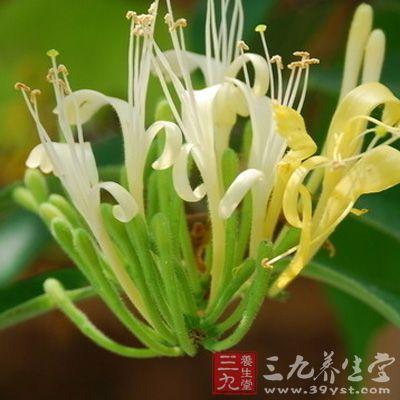 花和藤对多种致病菌如金黄色葡萄球菌