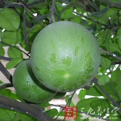 柚子皮的功效与作用 柚子皮药用价值有哪些