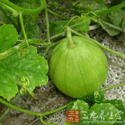 香瓜的营养价值 香瓜的食用功效(10)