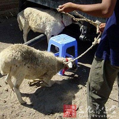 送货人拿出了盖有深圳市南山区动物检疫监督所检疫专