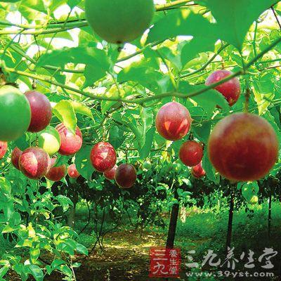 百香果的功效与作用 如何吃百香果更好