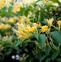 金银花的药用价值与应用