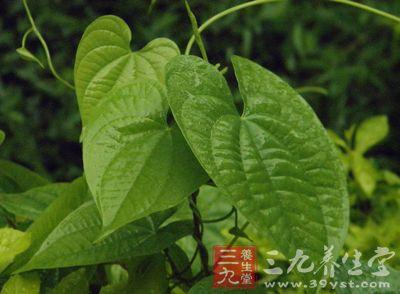 为薯蓣科植物黄独的块茎图片