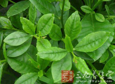 背景 壁纸 绿色 绿叶 树叶 植物 桌面 400_294