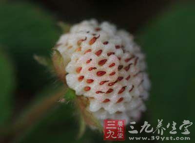 药材基源:为蔷薇科植物黄毛草莓的全草