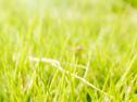 春分怎樣才能健康養肝