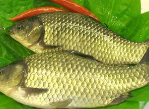 白鲫鱼的营养价值 白鲫鱼做法及食疗价值