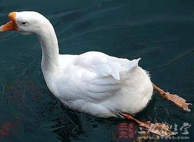 【别名】鹅尾罂   来源   药材基源:为鸭科动物家鹅的尾肉(肉含尾