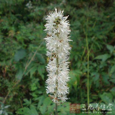 干燥根呈长圆柱形或纺锤形,长8~14厘米,直径0.4~1厘米