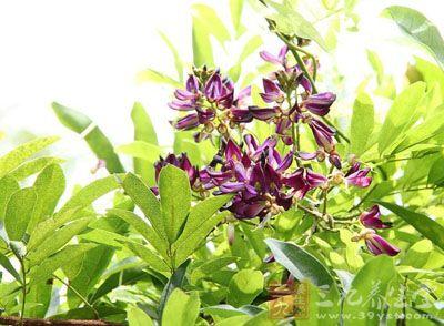 《中国主要植物图说·豆科》),黄藤,蓝藤(《湖南野生植物》)