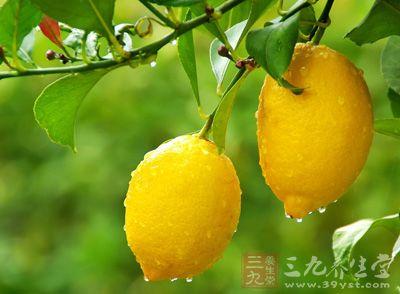 柠檬(Citrus limon)是芸香科柑桔属的常绿小乔木