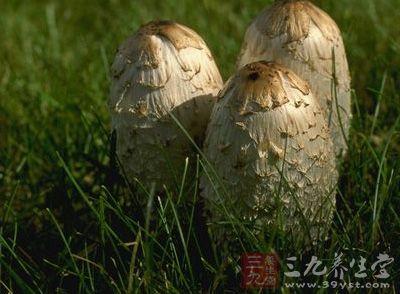 湖南食药监发布消安警示 切勿采食野生蘑菇