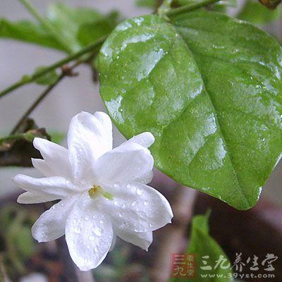 蒴果卵圆状,长约6mm.花期夏,秋季