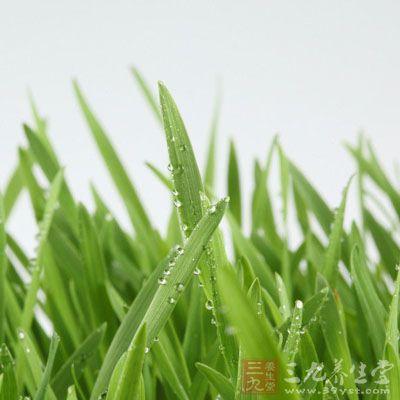 风藤草的药用价值与应用