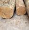 楠木的药用价值与利用
