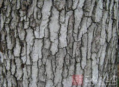 为金缕梅科植物枫香的树皮