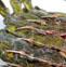 黄鲴鱼的药用价值与应用