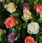 玫瑰花的药用价值与应用