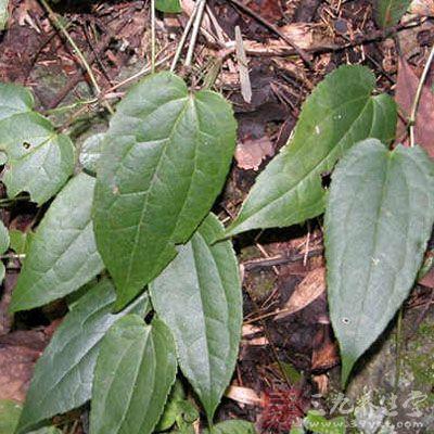 生于阴面山坡林缘或溪边灌丛中