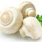 蘑菇的药用价值与应用