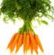 胡萝卜的药用价值与应用