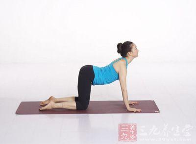 跪地后,小腿与大腿成90度,上身前弓与地面平行