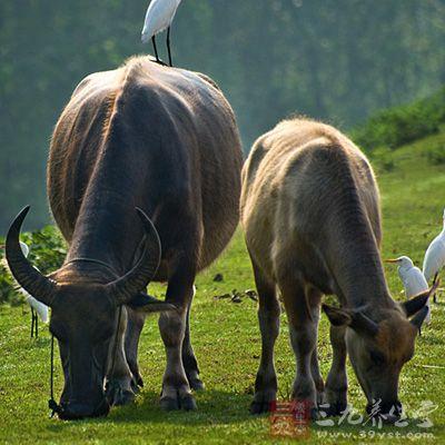 动物牛面食图片大全