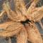 椰子皮的药用价值与应用