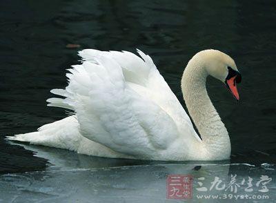 药材基源:为鸭科动物大天鹅的羽毛