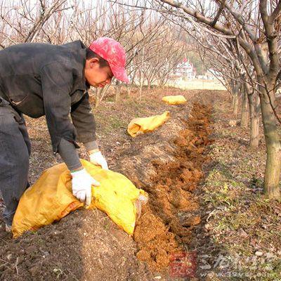 土壤施肥不适量,或多或少