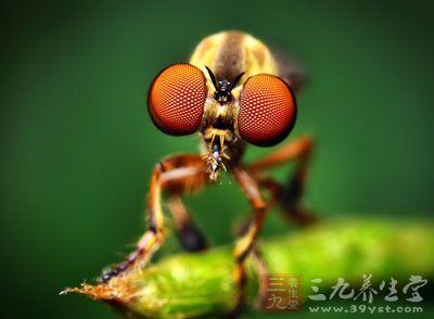 为虻科昆虫复带虻或其他同属昆虫的雌性全虫
