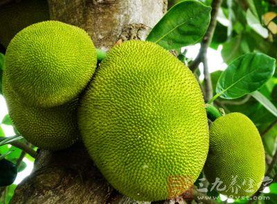 菠萝蜜是热带水果,也是世界上最重的水果