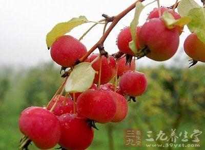 海棠果,原名:红厚壳 又名:海棠木,海棠果,胡桐,琼崖海棠树,君子树,呀