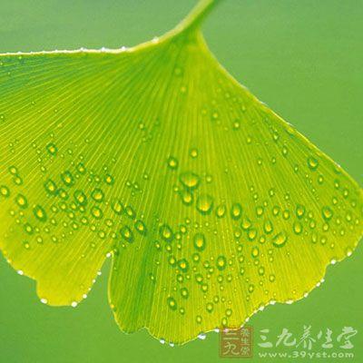 银杏叶的功效与作用 泡水喝有哪些禁忌