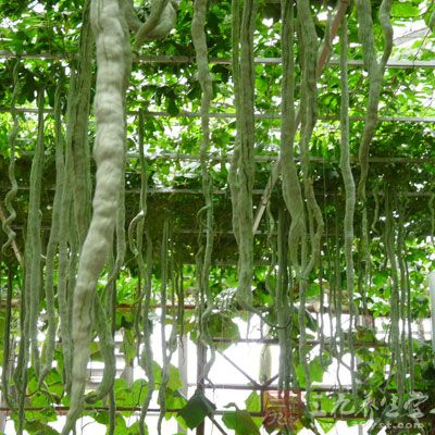 蛇瓜的营养成分(营养素含量/每100克)
