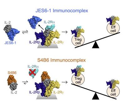 狂愹��y�+9il�j�y�m:)�h�y��9��_immunity称il-2抗体成免疫相关疾病治疗新希望