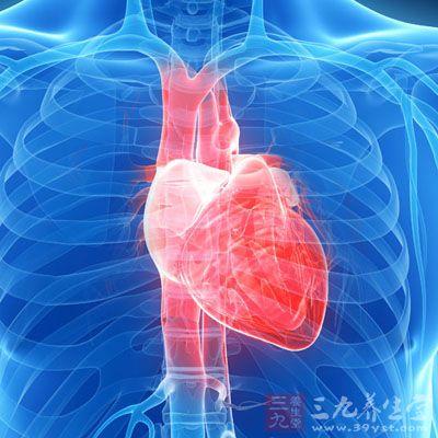 鱼类心脏结构图