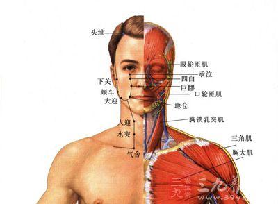 人体血分布图_胃经多气多血,是人体的能量源头