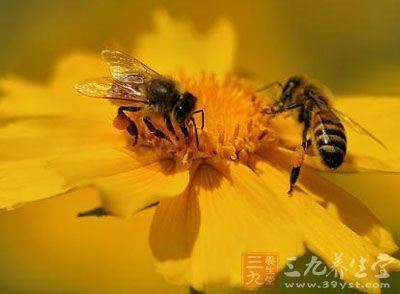 澳门新葡京酒店官网花粉怎么吃 食用花粉的途径